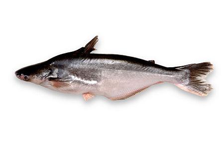 rybapang