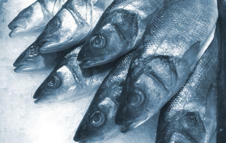 ryby na ledu