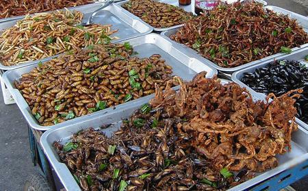 hmyz na taliri