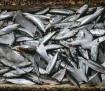 sardinky_foodiesfeed