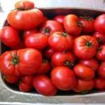 rajcata na sugo